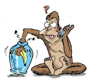 catch monkey in India
